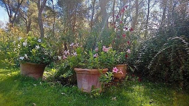 HDR dans mon jardin