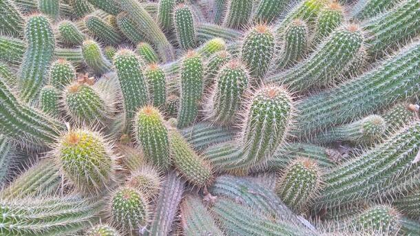 Lumia-640-XL_cactus