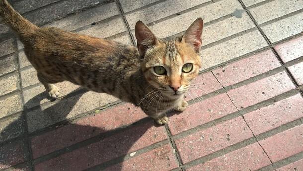 Lumia-640_cat