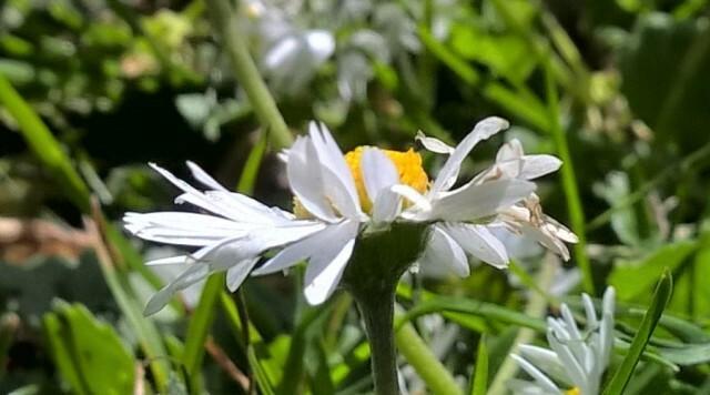 daisy-930-cropped