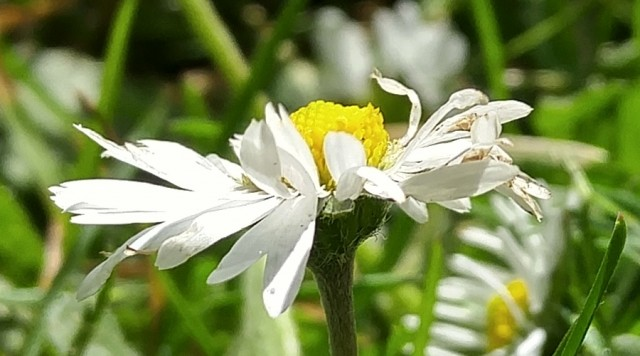daisy-g4-cropped