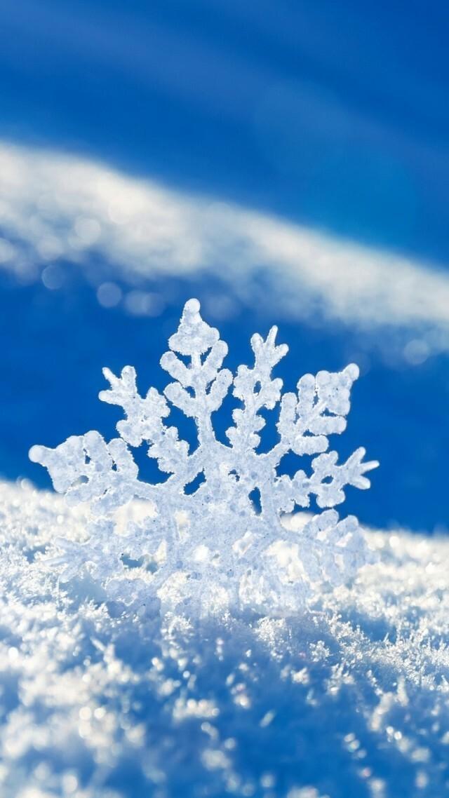 Macro White Snowflake Android Wallpaper