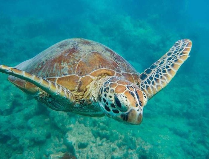 National Geographic capture la barrière de corail australienne avec le Lumia 950 XL