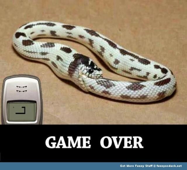 nokia snake funny