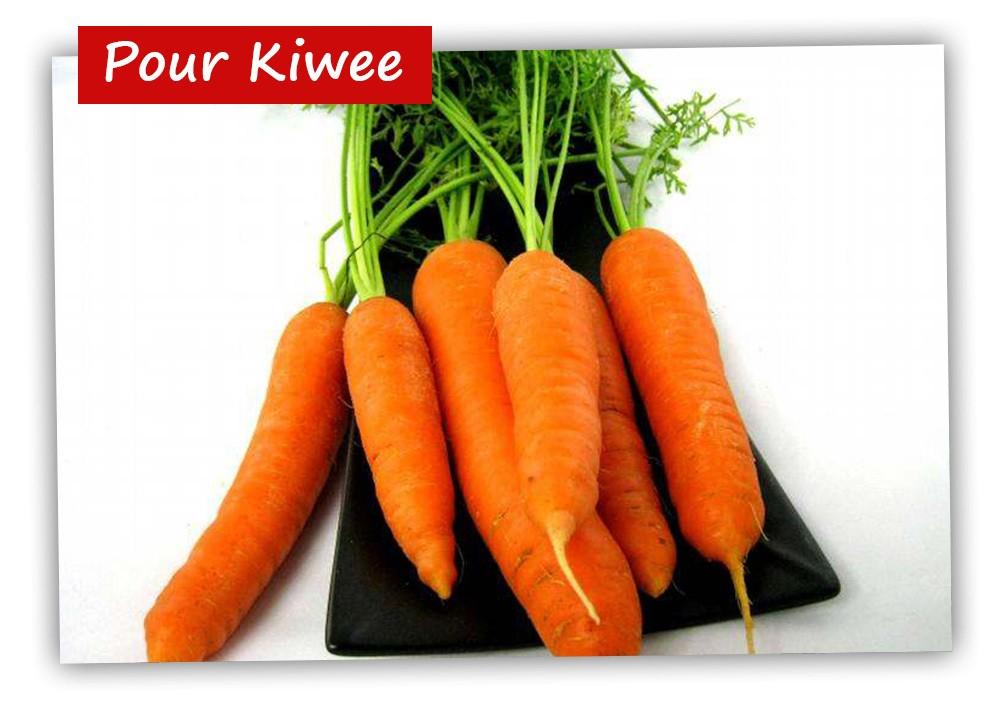 noel-kiwee