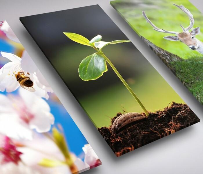 [Images]  Quelques fonds d'écran de printemps pour votre smartphone