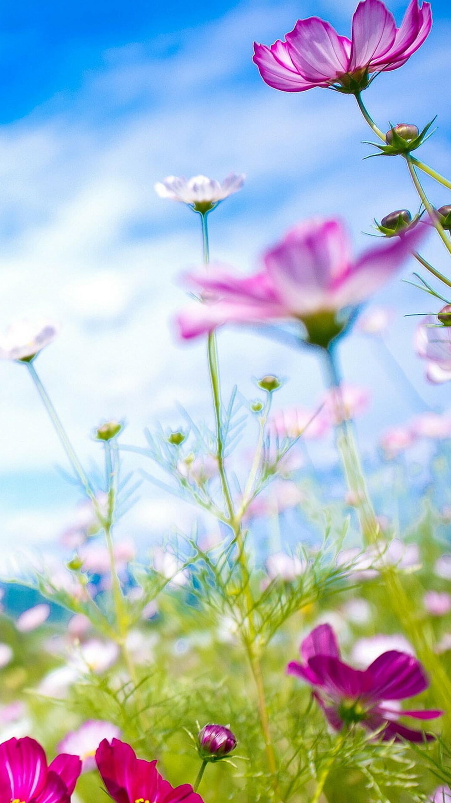 Images Quelques fonds d'écran de printemps pour votre smartphone - Nokians - La parole aux ...