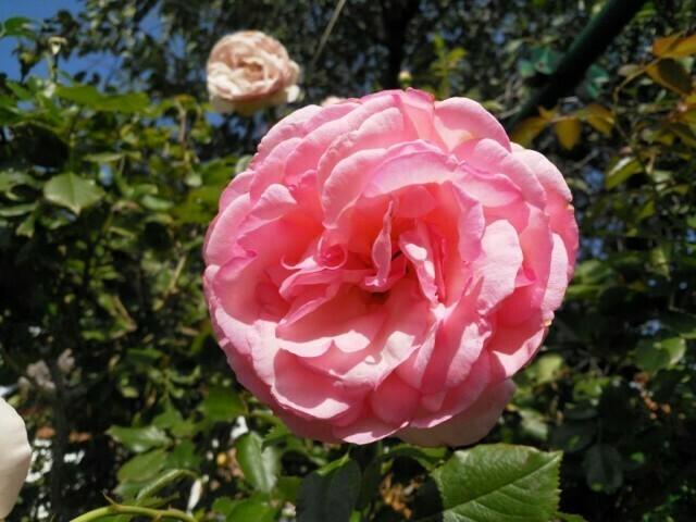 01 - Nokia 8 Jour fleurs - couleur