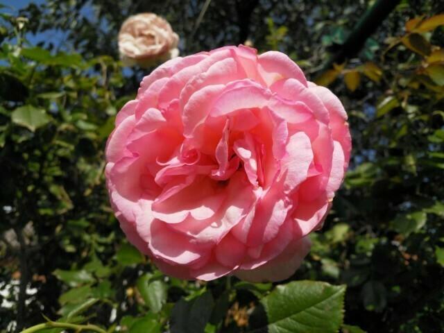 02 - Nokia 8 Jour fleurs - double