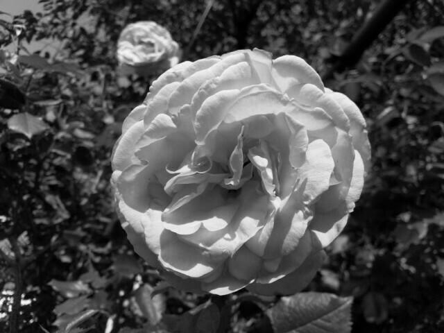 03 - Nokia 8 Jour fleurs - mono