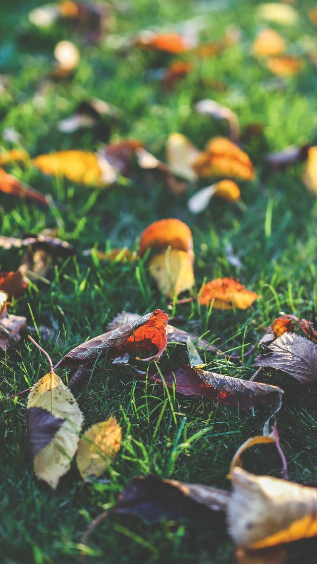 wallpaper-autumn-10