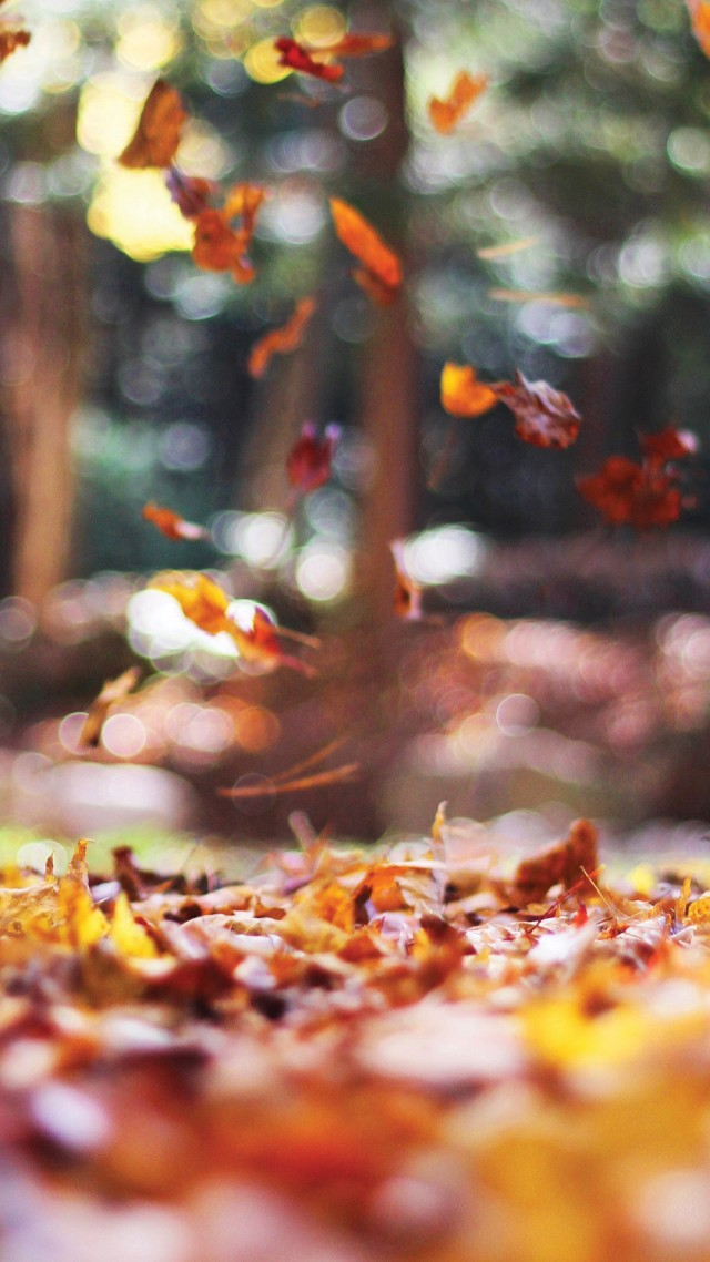 wallpaper-autumn-6