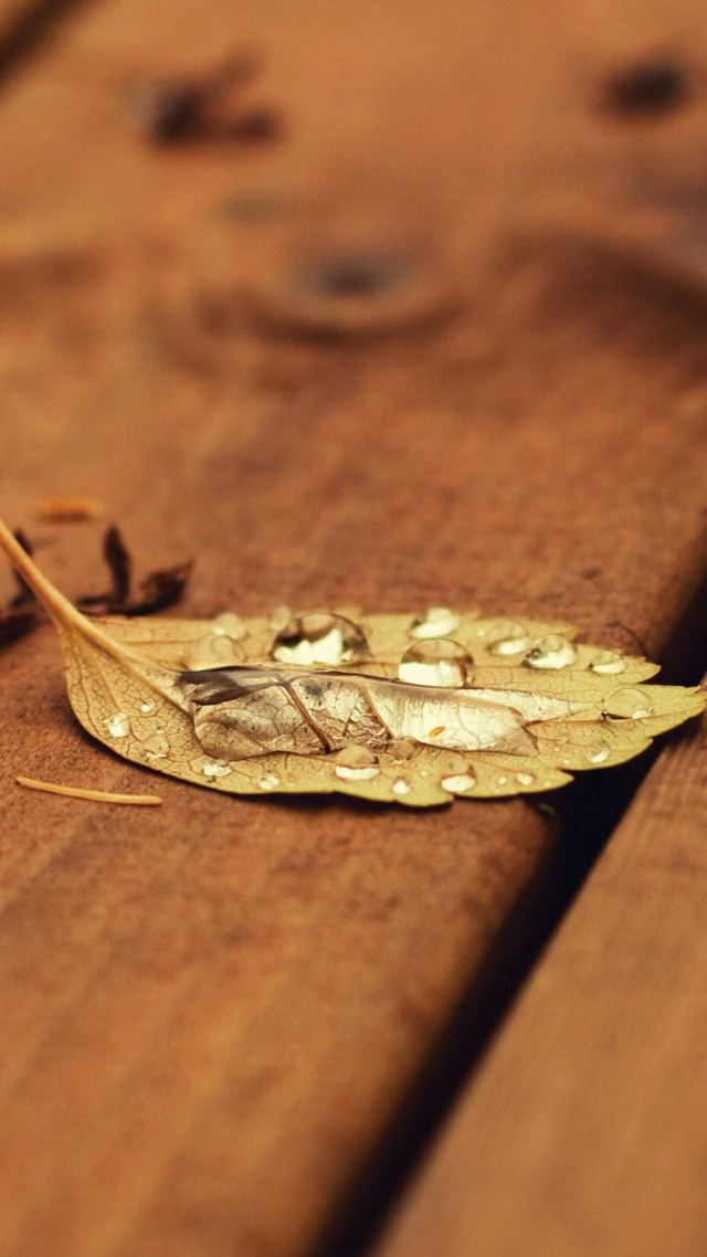 wallpaper-autumn-7