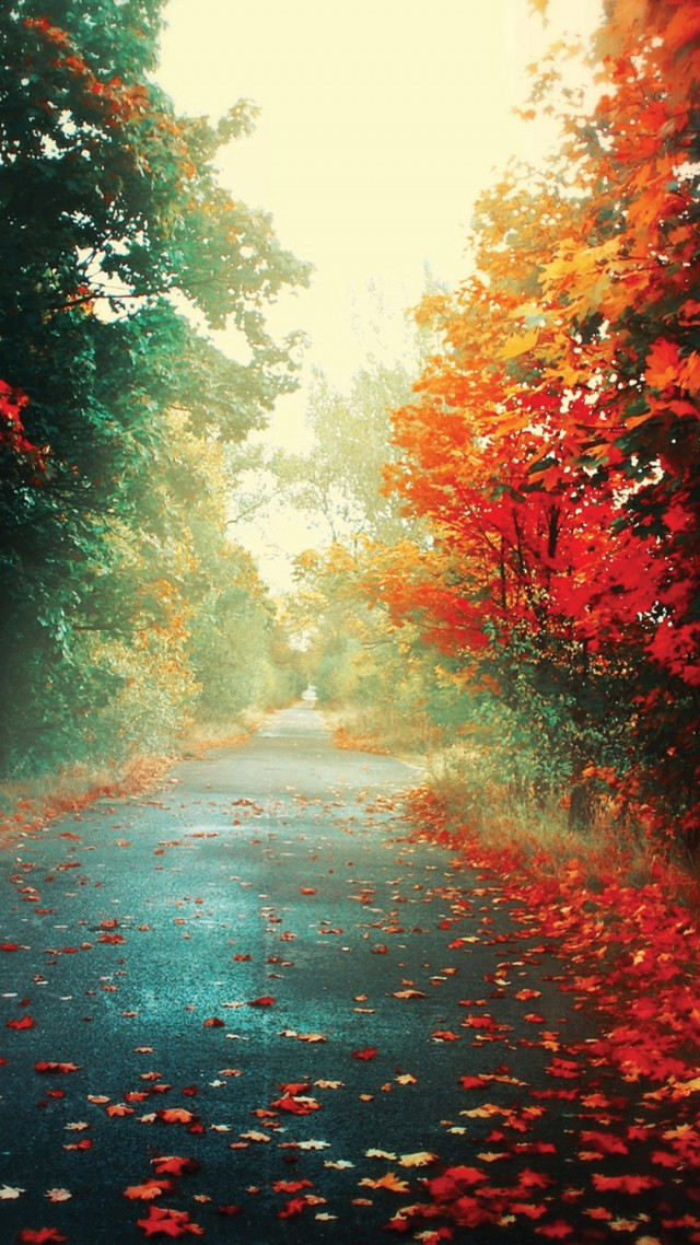 wallpaper-autumn-8
