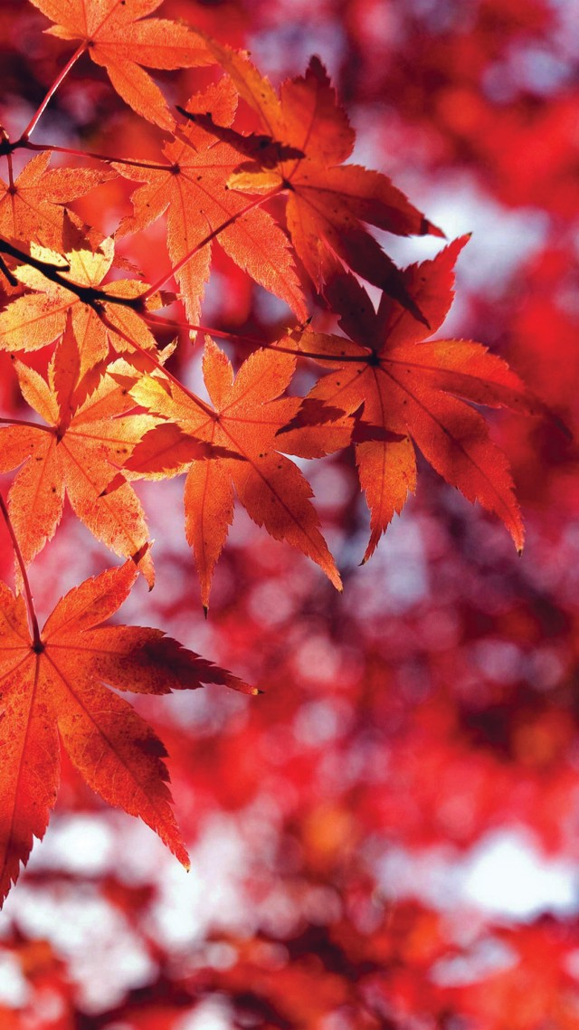 wallpaper-autumn-9