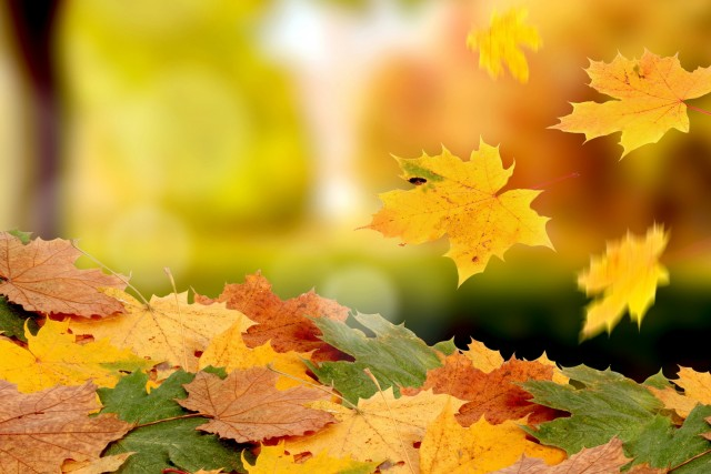 wallpaper-wide-autumn-3
