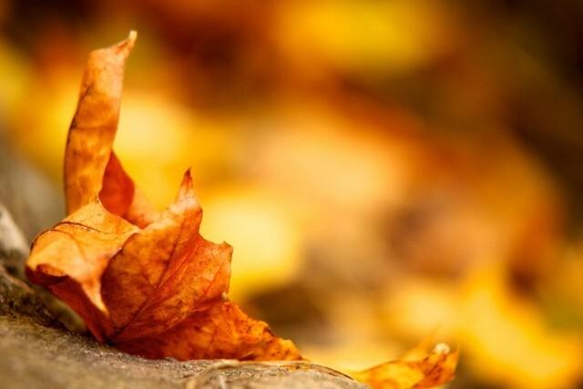 wallpaper-wide-autumn-4